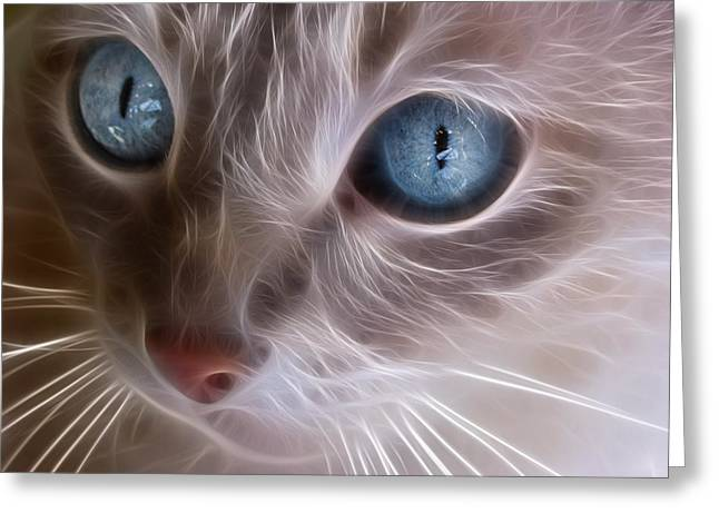 Cat Face Greeting Cards - Blue Eyes Greeting Card by Tilly Williams