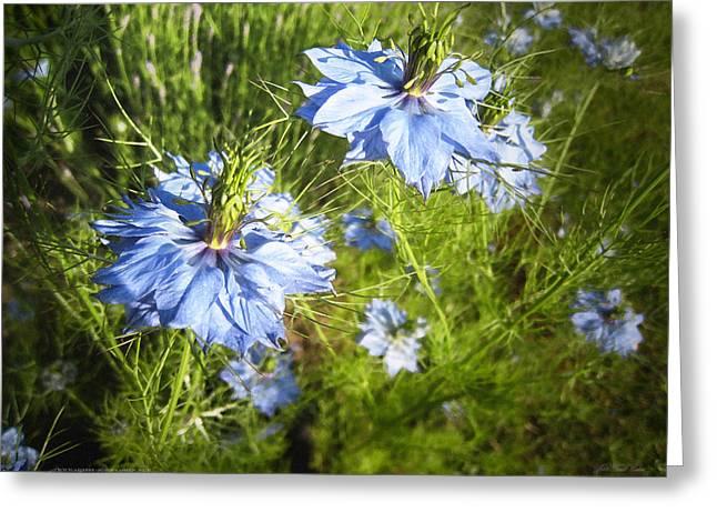 John Neville Cohen Greeting Cards - Blue Flowers Greeting Card by John Neville Cohen