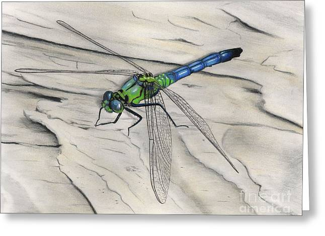 Dragonflies Pastels Greeting Cards - Blue-Green Dragonfly Greeting Card by Christian Conner