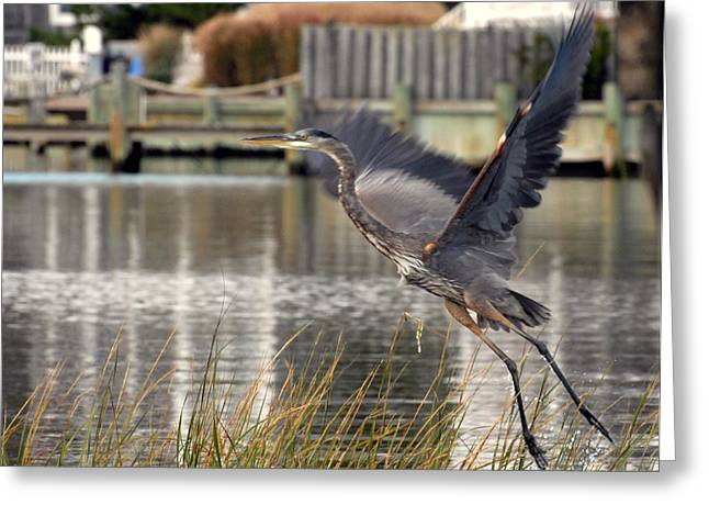Great Blue Heron Framed Print Greeting Cards - Blue Heron 163 Greeting Card by Joyce StJames