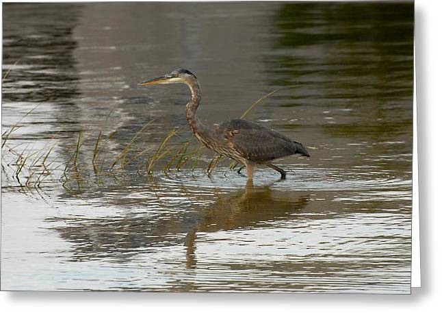 Great Blue Heron Framed Print Greeting Cards - Blue Heron 167 Greeting Card by Joyce StJames