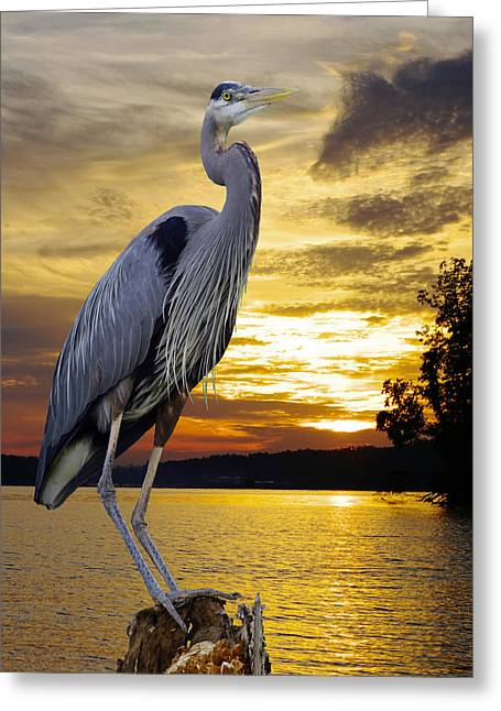 Brown Towhee Greeting Cards - Blue Heron At Sunset Greeting Card by Ron Kruger