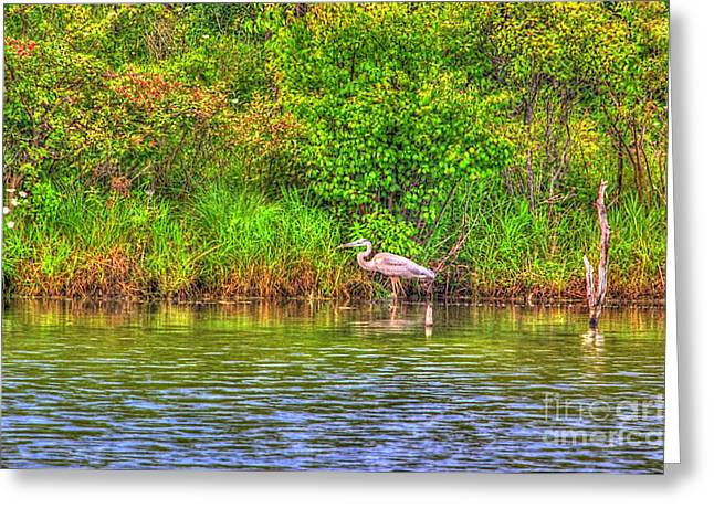 Great Birds Mixed Media Greeting Cards - Blue Heron-In the swamp-20 Greeting Card by Robert Pearson