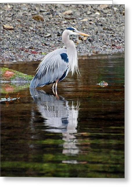 Prawn Boat Greeting Cards - Blue Heron Greeting Card by Jim Moore