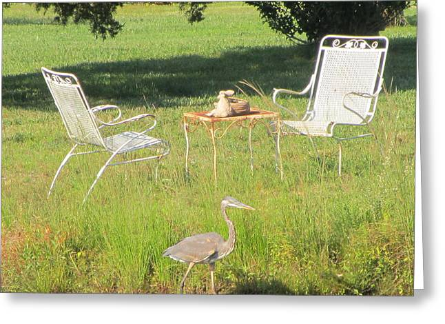 Lawn Chair Greeting Cards - Blue Heron - Lawn Chairs Greeting Card by Susan Carella