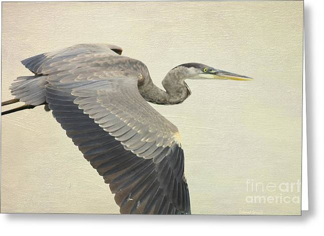 Blue Heron On Canvas Greeting Card by Deborah Benoit