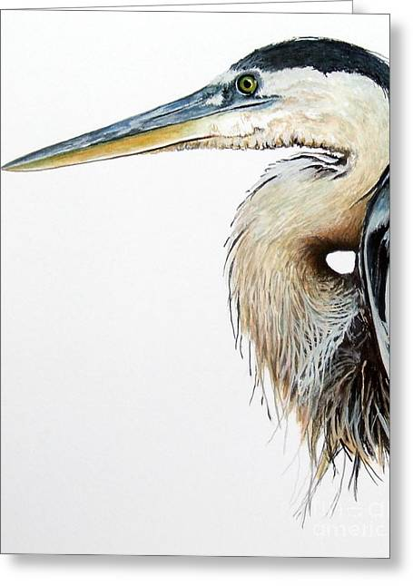 Blue Heron Study Greeting Card by Greg and Linda Halom