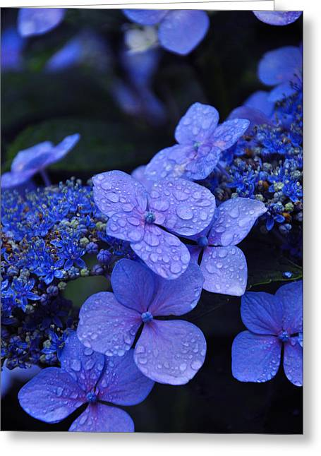 Drops Greeting Cards - Blue Hydrangea Greeting Card by Noah Cole