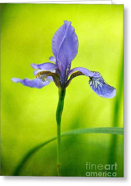 Iris Digital Art Greeting Cards - Blue Japanese Iris Greeting Card by Lois Bryan