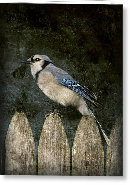 Blue Jay Images Greeting Cards - Blue Jay On The Fence Greeting Card by Angie Tirado