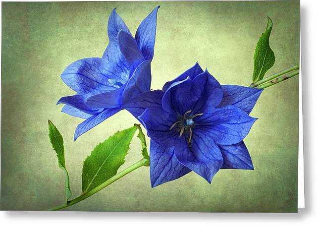 Balloon Flower Greeting Cards - Blue Greeting Card by John Burnett