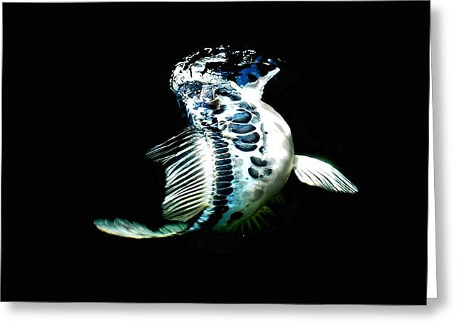 Blue Koi On The Rise Greeting Card by Don Mann