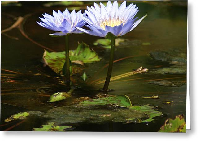 Lilly Pad Greeting Cards - Blue Lillies Greeting Card by Jean Haynes