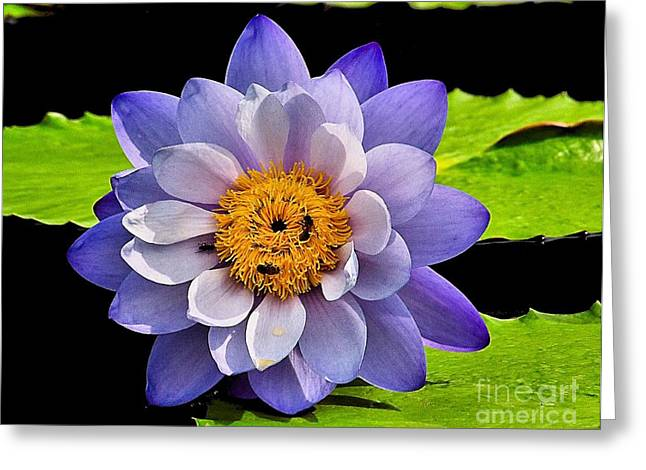 Lilly Pad Greeting Cards - Blue Lily Greeting Card by Nick Zelinsky