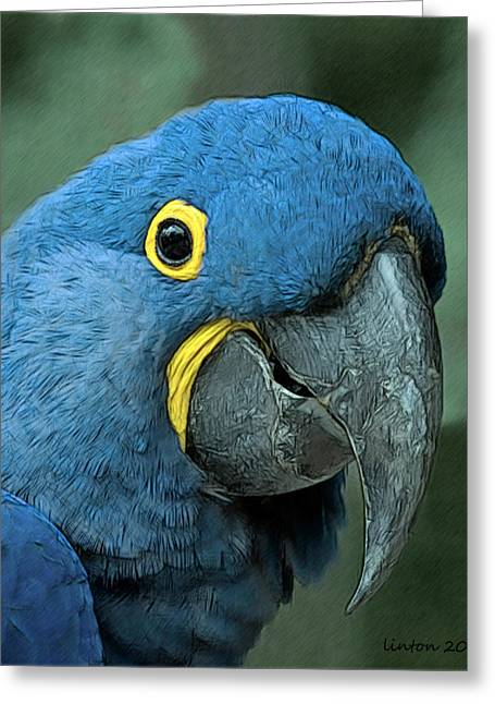 Macaw Art Greeting Cards - Blue Macaw 2 Greeting Card by Larry Linton
