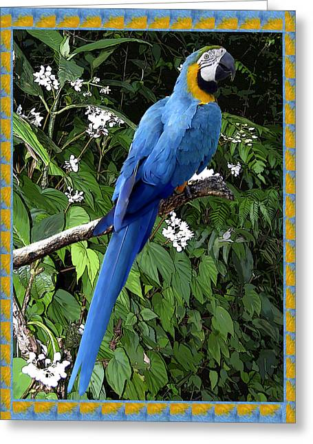 Parrot Digital Art Greeting Cards - Blue Macaw Greeting Card by Kurt Van Wagner
