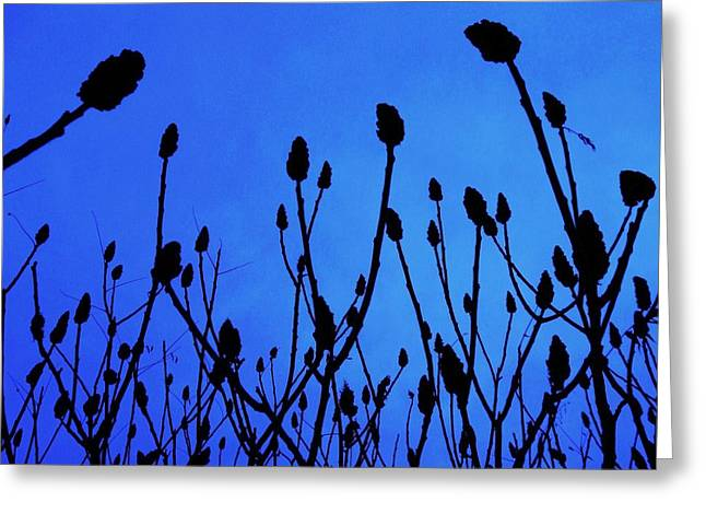 Blue Morning Greeting Card by TODD SHERLOCK