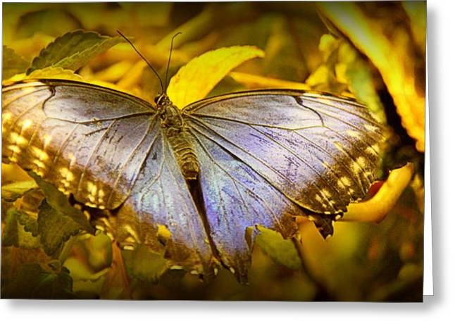 Brown Photographs Greeting Cards - Blue Morpho Butterfly on Leaves Greeting Card by Tam Graff