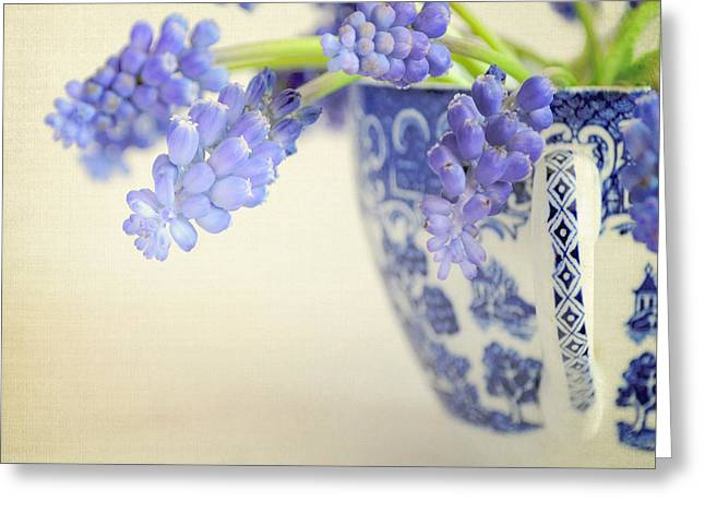 Lyn Randle Greeting Cards - Blue Muscari flowers in blue and white china cup Greeting Card by Lyn Randle
