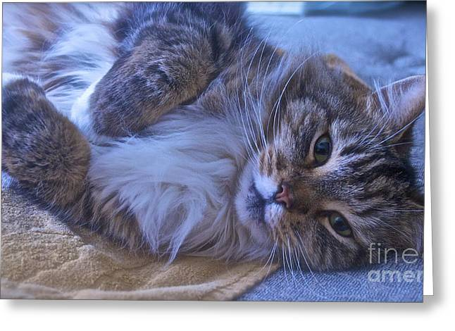 Napping Cat Greeting Cards - Blue Oblivion Greeting Card by Gwyn Newcombe