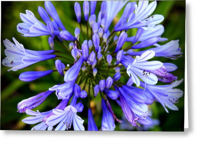 Blue And Green Greeting Cards - Blue On Blue Greeting Card by Karen Wiles