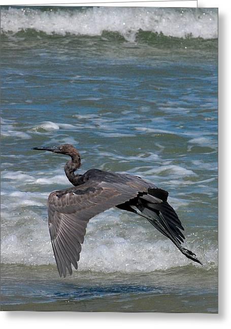 Sea Birds Digital Art Greeting Cards - Blue on the Beach Greeting Card by David Lane