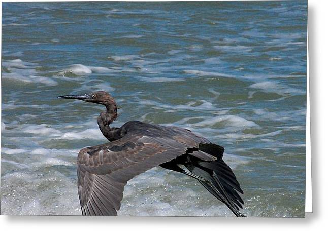 Blue on the Beach Greeting Card by David Lane