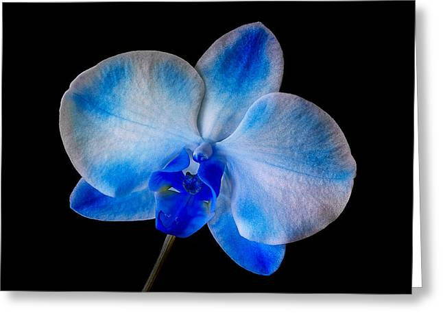 Water Drops Greeting Card featuring the photograph Blue Orchid Bloom by Susan Candelario
