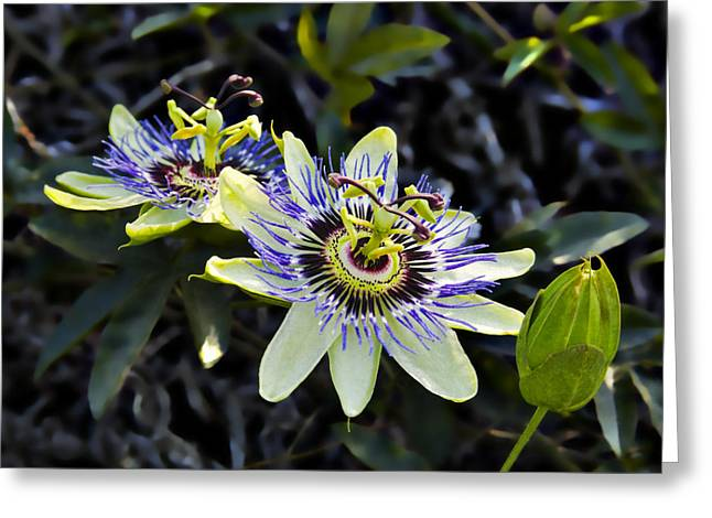 Passiflora Greeting Cards - Blue Passion Flower Greeting Card by Kelley King