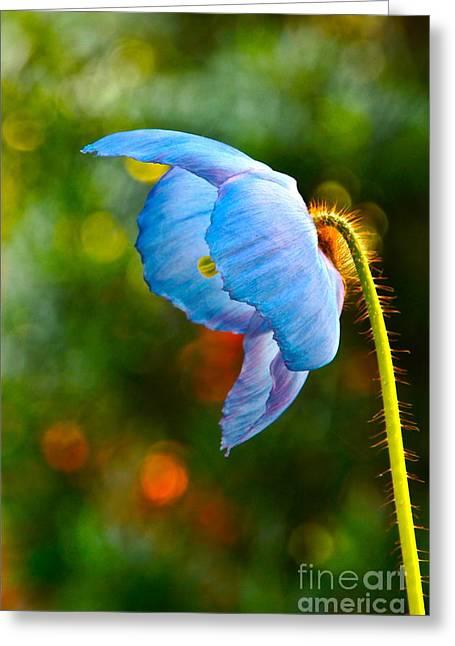 Byron Varvarigos Greeting Cards - Blue Poppy Dreams Greeting Card by Byron Varvarigos