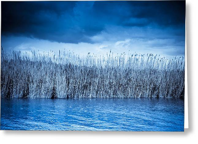 Blue Reeds Greeting Card by Ruth MacLeod
