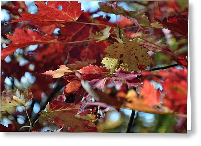 Bruce Gourley Greeting Cards - Blue Ridge Autumn Leaves 1.1 Greeting Card by Bruce Gourley