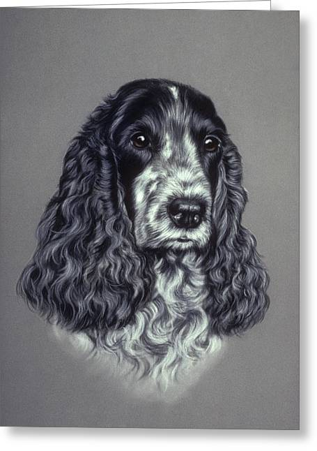 Curly Hair Pastels Greeting Cards - Blue Roan Cocker Spaniel Greeting Card by Patricia Ivy