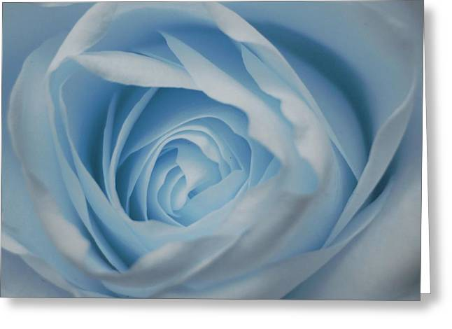 Rose Petals Greeting Cards - Blue Rose Greeting Card by Veronica Ventress