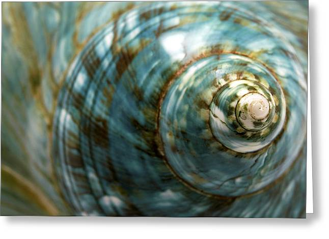 Sea Shell Greeting Cards - Blue Seashell Greeting Card by Fabrizio Troiani