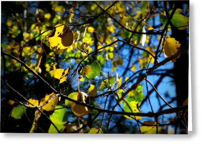 Prescott Greeting Cards - Blue Skies and Aspen Colors Greeting Card by Aaron Burrows