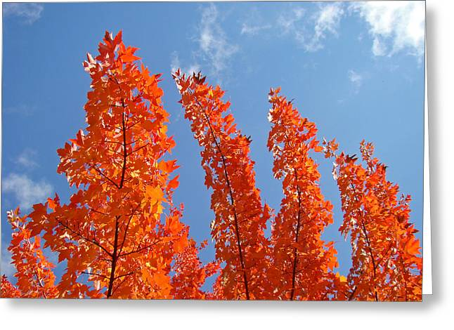 Autumn Art Greeting Cards - Blue Sky art prints Orange Autumn Leaves Greeting Card by Baslee Troutman