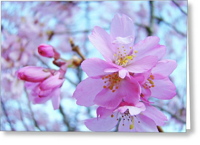 Pink Blossoms Greeting Cards - Blue Sky Floral art prints Pink Spring Tree Blossoms Greeting Card by Baslee Troutman Fine Art Collections