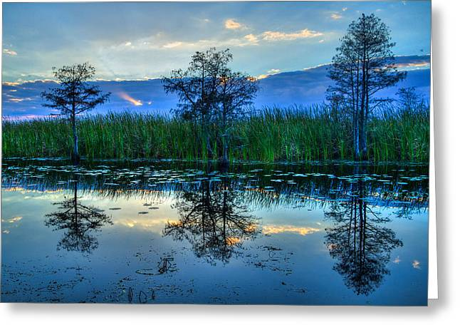 Lily Pad Greeting Cards Greeting Cards - Blue Sunset Greeting Card by Debra and Dave Vanderlaan