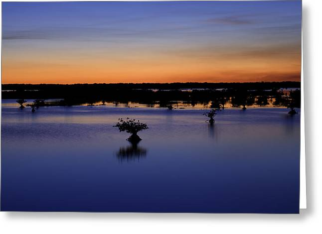 Wildlife Refuge. Greeting Cards - Blue Sunset Mangroves Greeting Card by Rich Franco