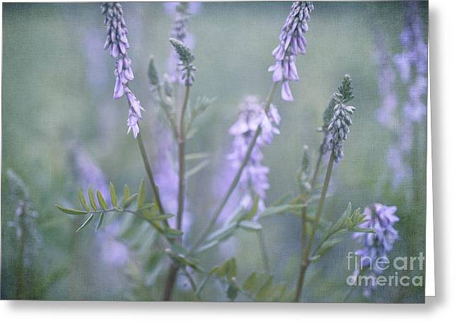 Verbena Greeting Cards - Blue Vervain Greeting Card by Priska Wettstein
