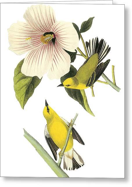 Audubon Greeting Cards - Blue-winged Warbler Greeting Card by John James Audubon