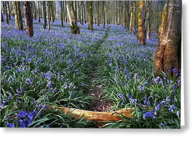 Bluebell Path Greeting Card by Kris Dutson