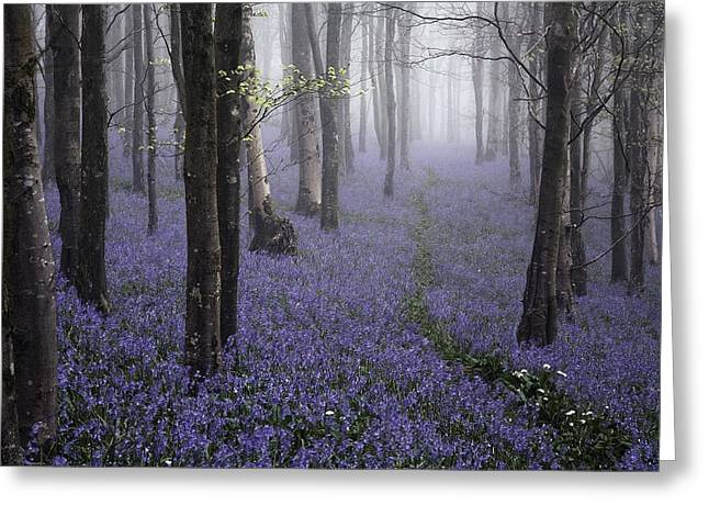 Kris Dutson Greeting Cards - Bluebells in the Mist Greeting Card by Kris Dutson