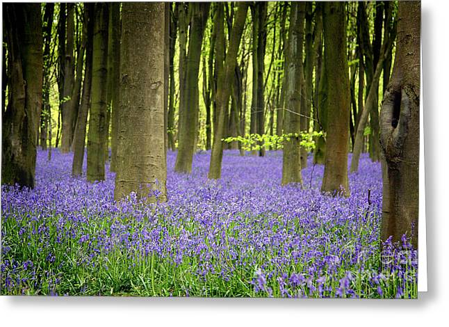 Color Green Greeting Cards - Bluebells Greeting Card by Jane Rix