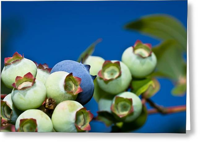 Flash Greeting Cards - Blueberries and Sky Greeting Card by Lori Coleman