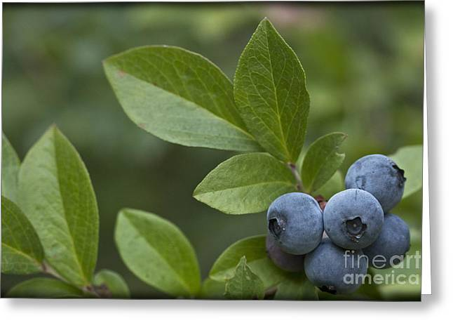 Blueberries On The Side Greeting Card by Kim Henderson