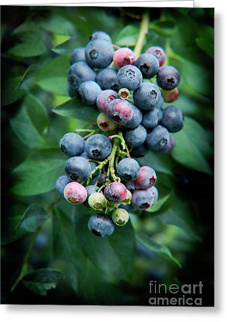 Kim Henderson Greeting Cards - Blueberry Cluster Greeting Card by Kim Henderson