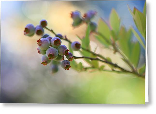 Abstract Blueberries Greeting Cards - Blueberry Goodness Greeting Card by Heidi Smith