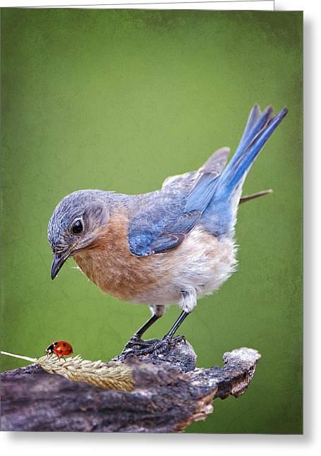 Eastern Bluebird Greeting Cards - Bluebird and Ladybird Greeting Card by Bonnie Barry